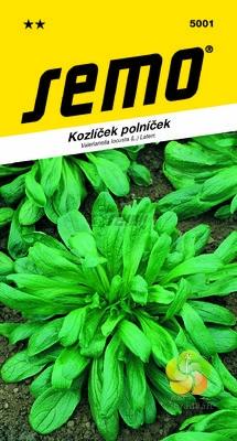 Fotografie Kozlíček Polníček LARGED LEAVED (D´Olanda a seme grosso) (5001)