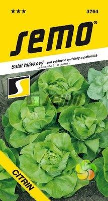 Salát hlávkový CITRIN (3764)