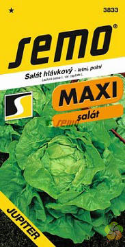 Salát hlávkový JUPITER (3833)