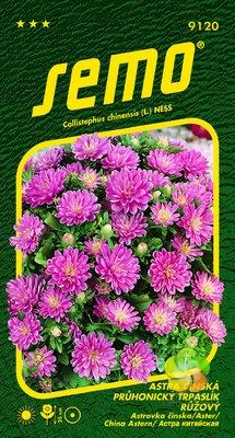 Astra čínská - Průhonický Trpaslík Růžový (9120)