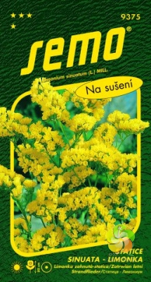 Statice sinuata (Limonka) - Bonduellei (Yellow) (9375)