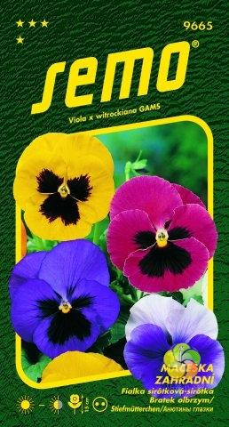 Maceška zahradní velkokvětá - Směs S OKEM (9665)