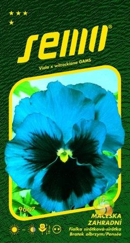 Maceška zahradní velkokvětá - MODRÁ (9667)