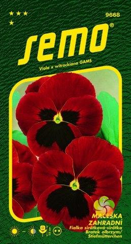 Maceška zahradní velkokvětá - ČERVENÁ (9668)
