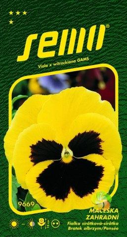 Maceška zahradní velkokvětá - ŽLUTÁ (9669)