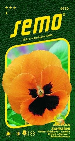 Maceška zahradní velkokvětá - ORANŽOVÁ (9670)