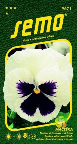 Maceška zahradní velkokvětá - BÍLÁ (9671)
