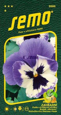 Maceška - GLACIER ICE VIOLET WHITE (9686)