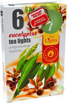 Svíčka čajová 6 ks Eucalyptus vonná