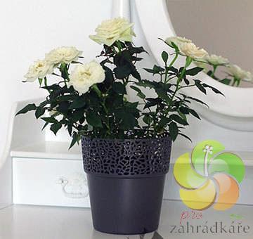 Obal na květiny ROSA antracit - průměr 13 cm , výška 14 cm