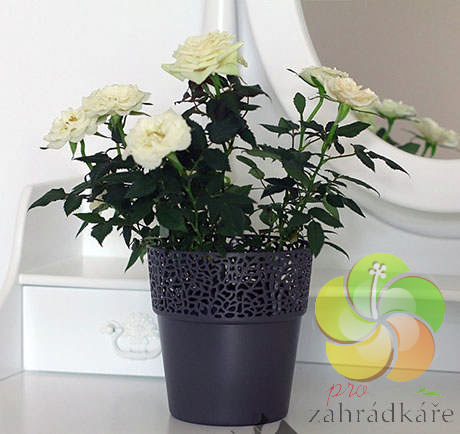 Obal na květiny ROSA antracit - průměr 14,5 cm , výška 15,5 cm