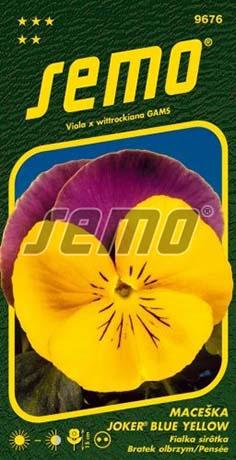 Maceška zahradní velkokvětá Joker Blue Yellow (9676)